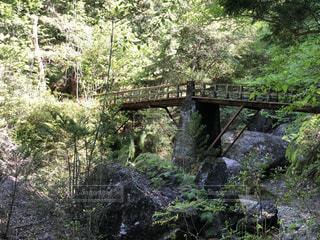 橋,森林,新緑