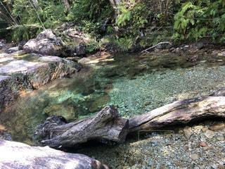 自然,川,水面