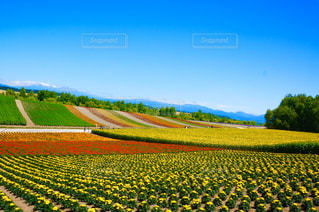 自然,風景,空,屋外,北海道,景色,草,新緑,草木