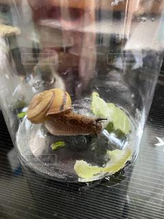 虫,昆虫,食事中,梅雨,カタツムリ