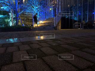 夜景,屋外,樹木,イルミネーション,都会,明るい,通り,インスタ映え