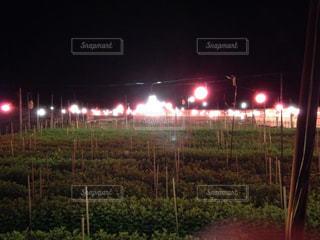 夜,屋外,沖縄,電照菊,12月