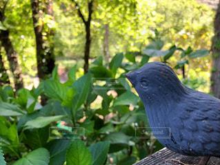 森林,鳥,木,屋外,鮮やか,樹木,とり,景観,スズメ