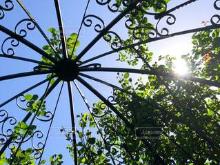 空,森林,屋外,青空,鮮やか,樹木,アイアン,草木