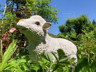 空,動物,緑,羊,葉,景色,ひつじ,樹木,新緑,Green,草木,ガーデン,ヒツジ