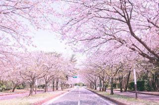 風景 - No.431088