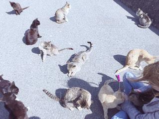 猫,風景,にゃんこ,ねこ,portrait,相島,猫の島