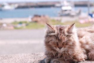 風景,にゃんこ,ねこ,portrait,相島,猫の島