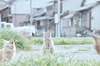 猫 - No.431216
