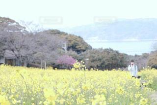 風景,能古島