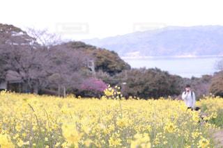 黄色の写真・画像素材[605491]