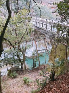 森の川に架かる橋の写真・画像素材[1016672]