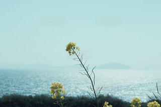 水の体の横にあるツリーの写真・画像素材[1405401]