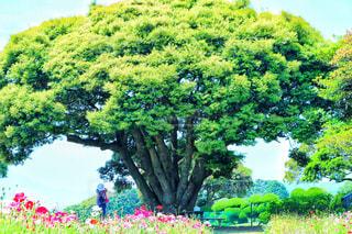 庭園の緑の植物の写真・画像素材[1405403]