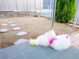 建物の前に座っている犬の写真・画像素材[3229285]