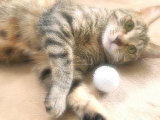 地面に横たわっている猫の写真・画像素材[3367221]