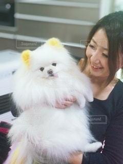 カメラのポーズをとる犬を抱いている女性の写真・画像素材[3369919]