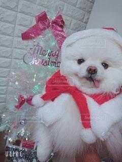 テディベアを持つ犬の写真・画像素材[3369921]