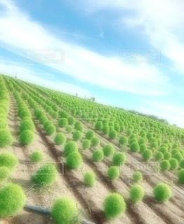 緑の植物の写真・画像素材[3583966]