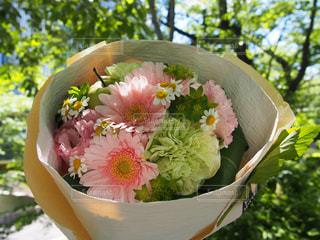 花の写真・画像素材[382546]