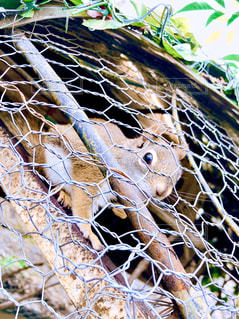 枝の上に立つヒョウの写真・画像素材[3184544]