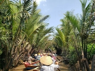 屋外,ボート,川,観光,樹木,旅行,ヤシの木,ベトナム,ジャングル,クルーズ,ベトナム旅行,手漕ぎ