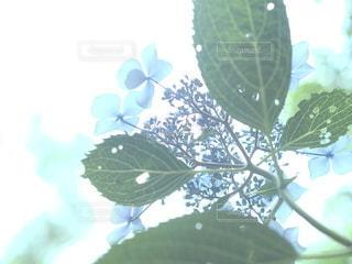 風景,花,カメラ女子,緑,あじさい,紫陽花,フォトジェニック,インスタ映え