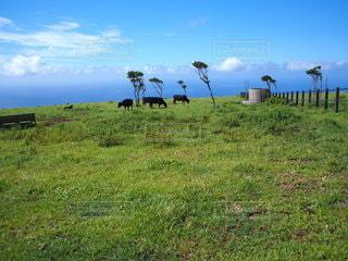 自然,風景,空,カメラ女子,雲,牛,牧場,景色,草,新緑,旅行,草木,フォトジェニック