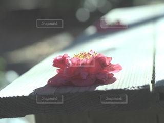 花,カメラ女子,ピンク,花びら,牡丹,フォトジェニック,インスタ映え
