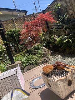 食べ物,自然,秋,樹木,地面,観葉植物,石,七輪,お庭,草木,焼きおにぎり,良き天気