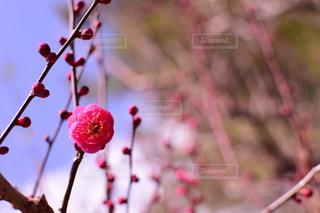 空,花,冬,梅,旅行,正月,迎春