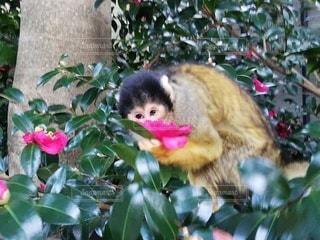 猿,動物,屋外,樹木