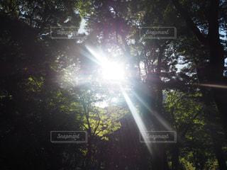 木漏れ日の写真・画像素材[3183033]