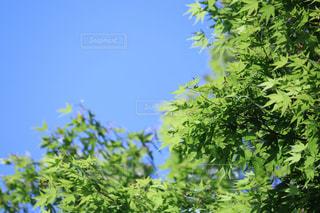 空,花,森林,屋外,緑,樹木,空と緑