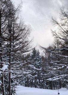 冬,森林,雪,景色,樹木,スキー,日中