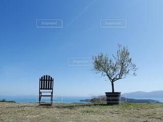 オリーブの木とベンチの写真・画像素材[3184166]
