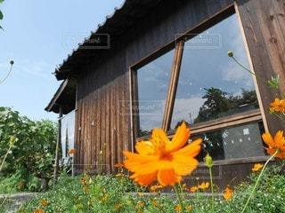 オレンジの花と小屋の写真・画像素材[3184193]