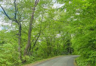 道路も五月色の写真・画像素材[3213090]