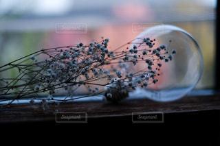 花,夕暮れ,電球,ドライフラワー,窓辺,おうち時間,Stay home