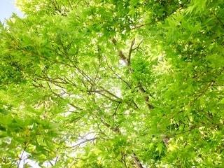 森の中の木の写真・画像素材[3197771]