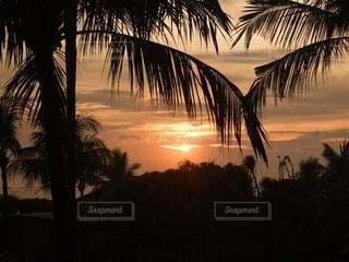 夕日とヤシの木の写真・画像素材[3402778]