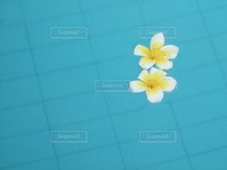 花の写真・画像素材[3560997]