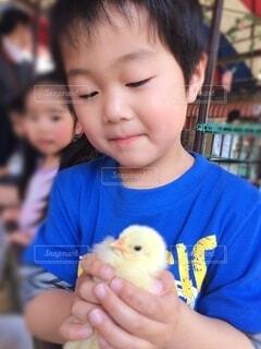 子ども,動物,鳥,かわいい,青,手持ち,人物,人,ひよこ,笑顔,幼児,ポートレート,動物園,少年,男の子,4歳,5歳,ライフスタイル,ふれあい,手元,男児,上半身