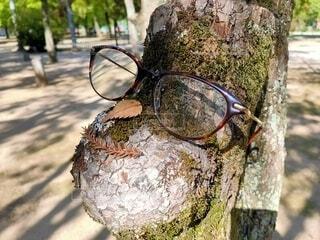 微笑むメガネさんの写真・画像素材[3769462]