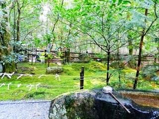 森の中の木の写真・画像素材[4408180]