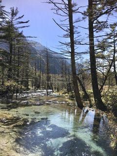 川藻の喜びの写真・画像素材[3242445]