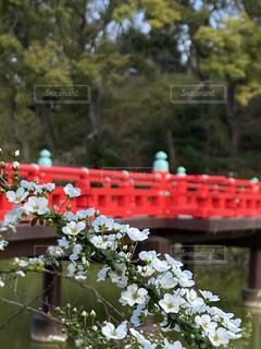 風景,花,橋,野外