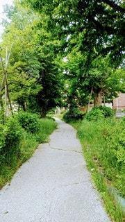 樹木,歩道,グリーン,遊歩道,草木