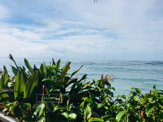 自然,海,空,屋外,緑,雲,青,草木