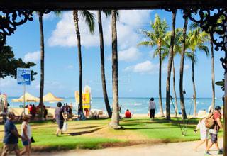 海,空,屋外,緑,ビーチ,青,砂浜,海岸,樹木,ヤシの木